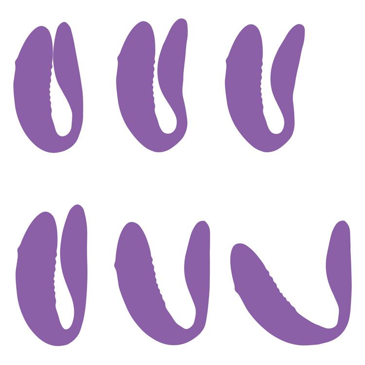 We-Vibe-Chorus-Purple